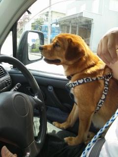 車の中は暑いです。