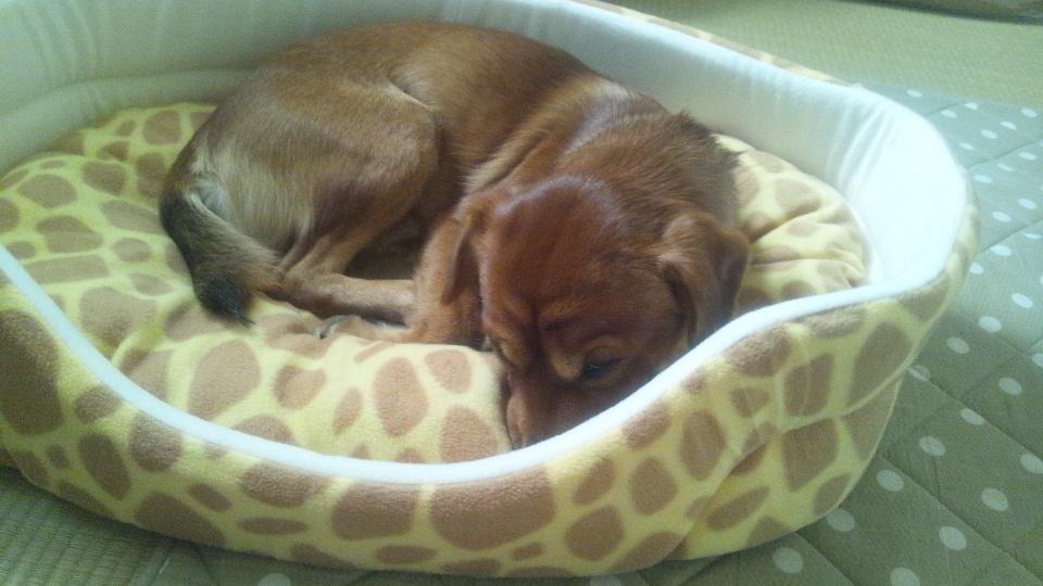 きりんのベッド2
