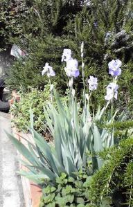 イリスとハーブ園