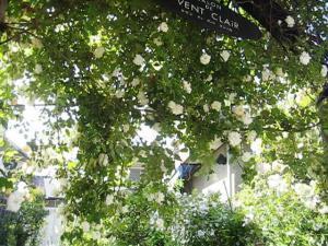 白いツルバラアーチ