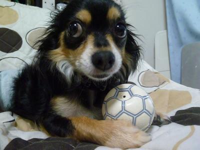 奪ったボール