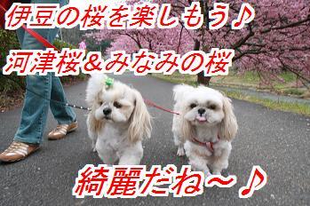 kawadu.jpg