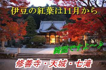 kouyou_20121104030733.jpg