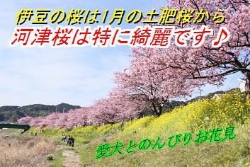sakurasin_20121226014608.jpg
