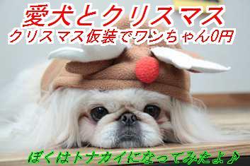 xms_20121123021051.jpg
