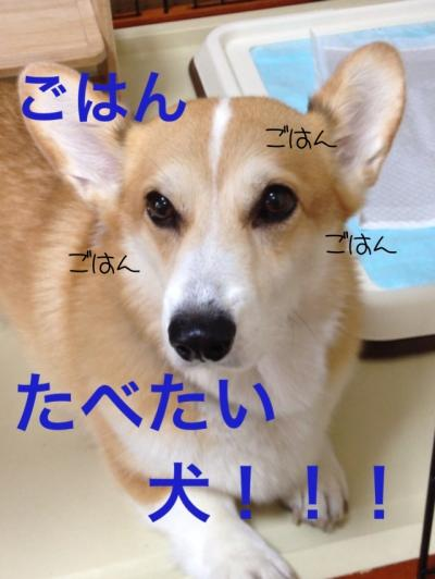 ごはん食べたい犬