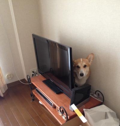 テレビの後ろ