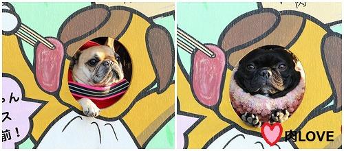 s-25PicMonkey Collage13