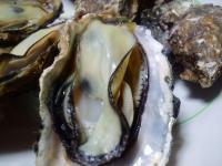 牡蠣調理写真アップ