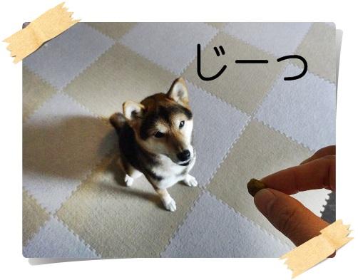 komaro20141023_4.jpg
