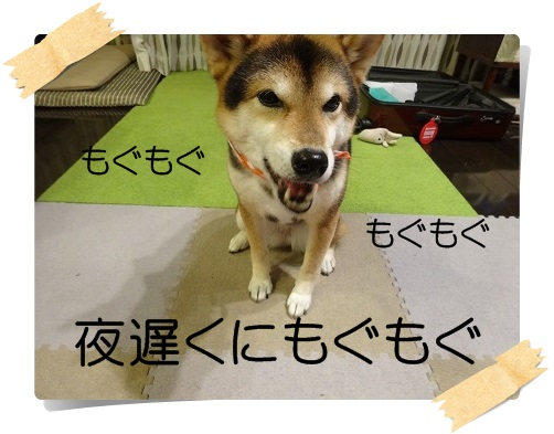 komaro20141103_4.jpg