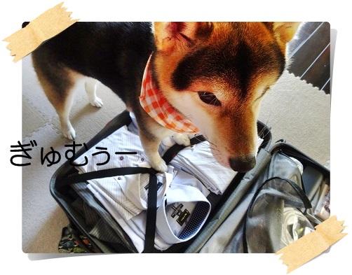 komaro20141110_2.jpg