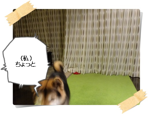 komaro20141123_12.jpg