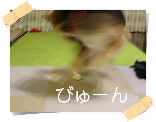 komaro20141123_6.jpg