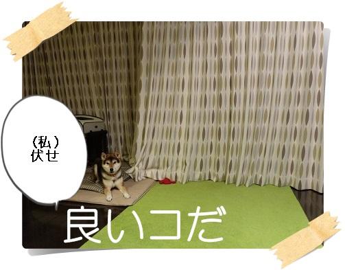 komaro20141123_8.jpg