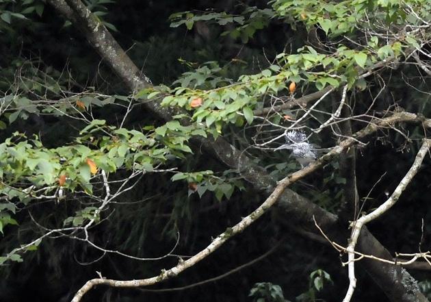 20120811-ranbu-004.jpg