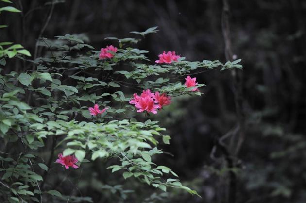 8J3-20120515-001.jpg