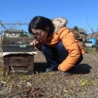 小森養蜂場
