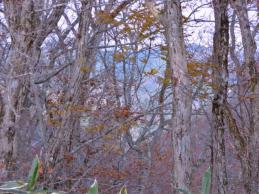 稜線も雑木と笹に覆われて・・・落葉の隙間から・・・