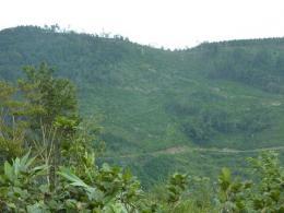下山BコースからAコース八巻山方面を眺める