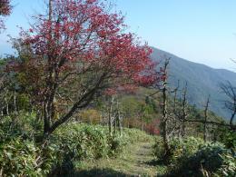 紅葉のはじまり、山頂部へ到着