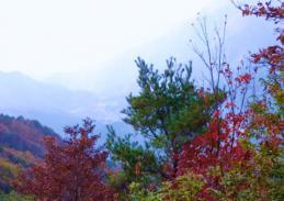 登山道 数少ない展望地から
