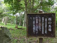 12:36桜の馬場 (写ってます!!)