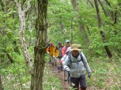 若葉の登山道