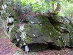 毛無大岩 歩道横の大苔岩の上には植物・木も育っている。