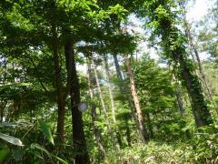笹の原 松の登山道