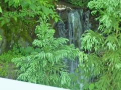 橋の横の小さな滝