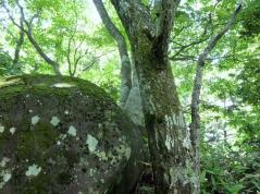 前山 頂上の大岩