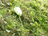水田の岸に これ?雨蛙の卵だあって!!
