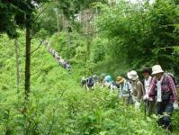 6月43名の参加で大登山行列
