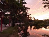 神社のお堀も染めた朝陽