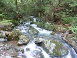 蛇渕の滝 登山口近く