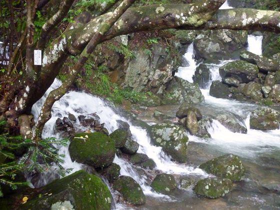 蛇渕の滝へと渓谷の水が流れ込む