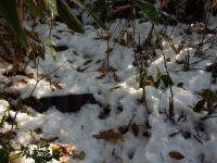 残雪と笹の中 石段を探して歩く