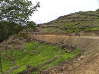 天狗寺山へ 杉林が伐採され桧の苗植林の山腹を歩く