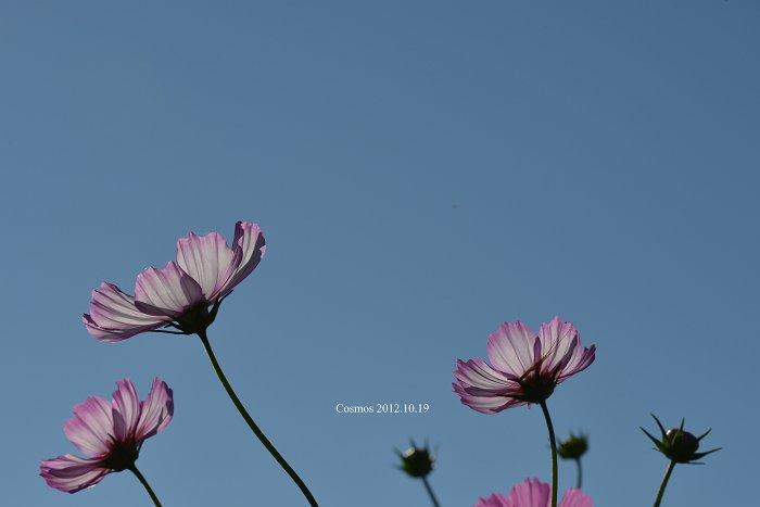 DSC_0465-S.jpg