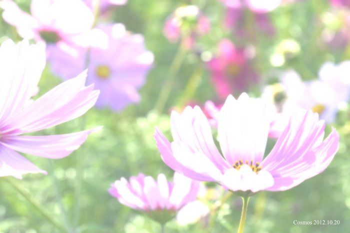DSC_0516-S.jpg