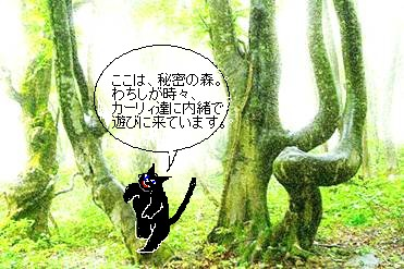 出会いは秘密の森