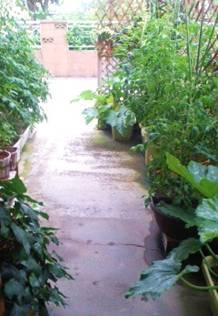 野菜ガーデン