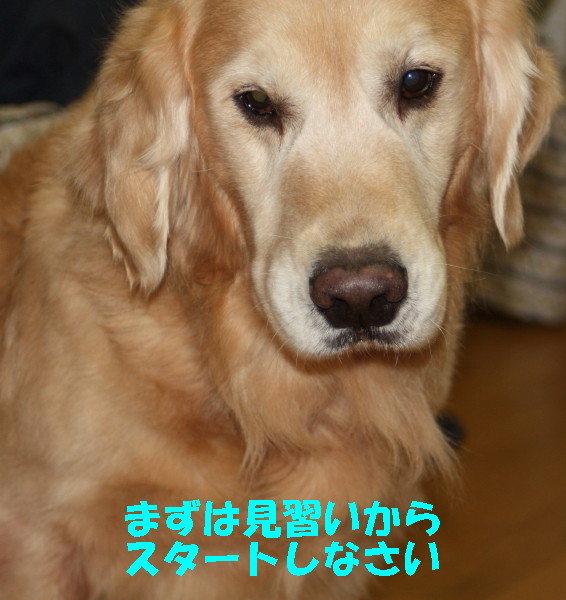 bu-97250001.jpg