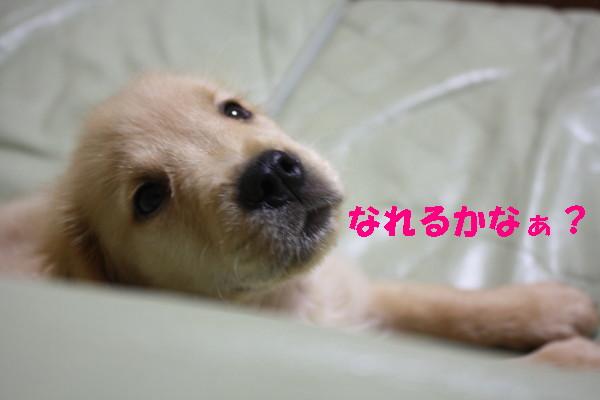 bu-97380001.jpg