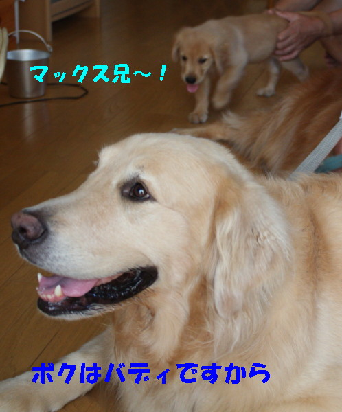 bu-97550001.jpg