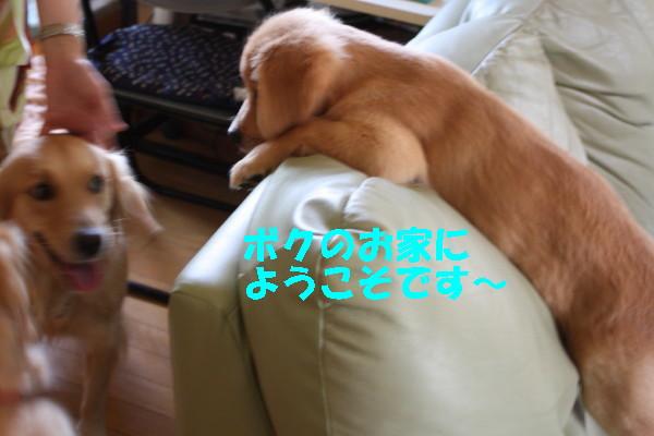 bu-97990001.jpg