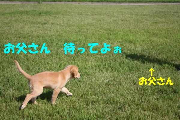 bu-98300001.jpg