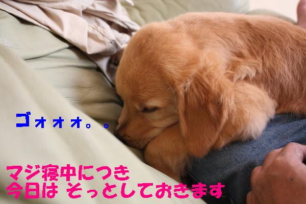 bu-98410001.jpg