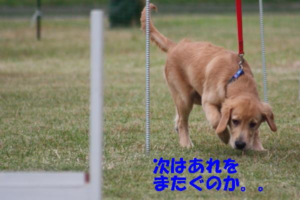 bu-98870001.jpg